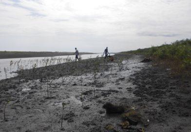18.000 plantes pour le reboisement des terrains communautaires