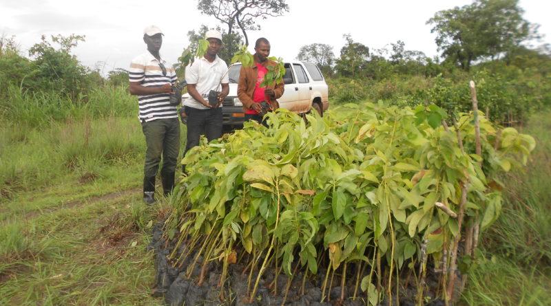 Le RENASCEDD à la rescousse environnementale à Tokhèlè (Douprou)