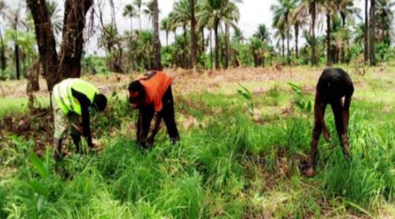 La Guinée passe au vert sur Treeapp!