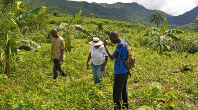 Suivi des plantations : Le taux de reprise des plants est satisfaisant à Moussaya !